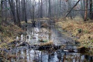 Rzeka Żarnówka