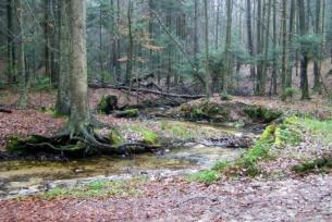 Rzeka Lubianka